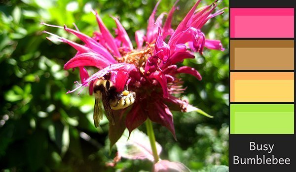 Color Palettes: Busy as a Bumblebee