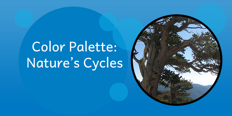 Color Palettes: Nature's Cycles