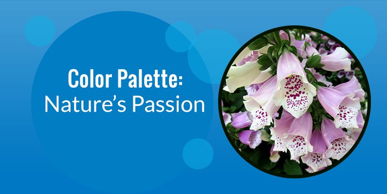 Color Palette: Nature's Passion