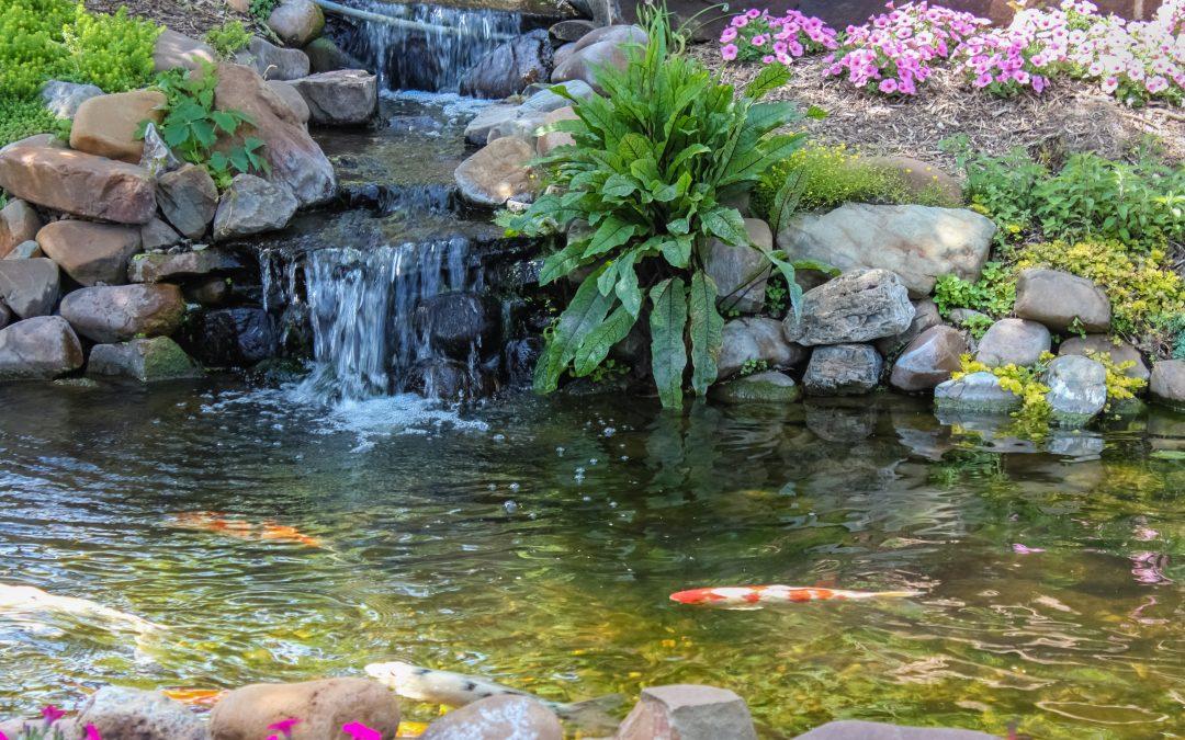 July blog for organic SEO